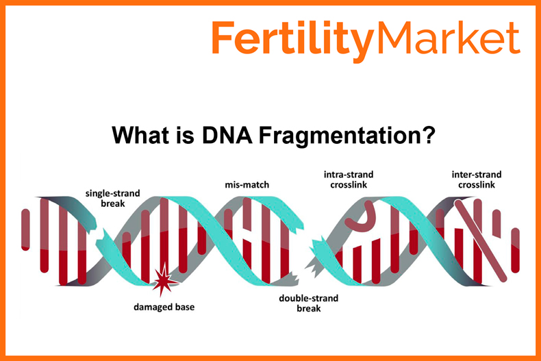 What is DNA Fragmentation? Boost fertility with healthy sperm DNA.