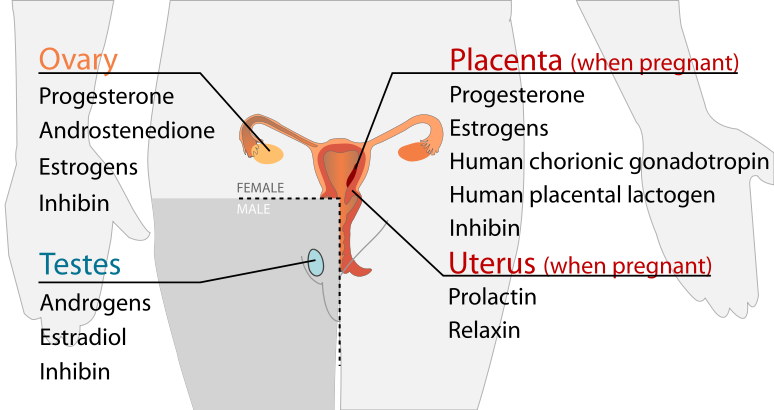 A diagram of the hormones produced by organs of the reproductive system.