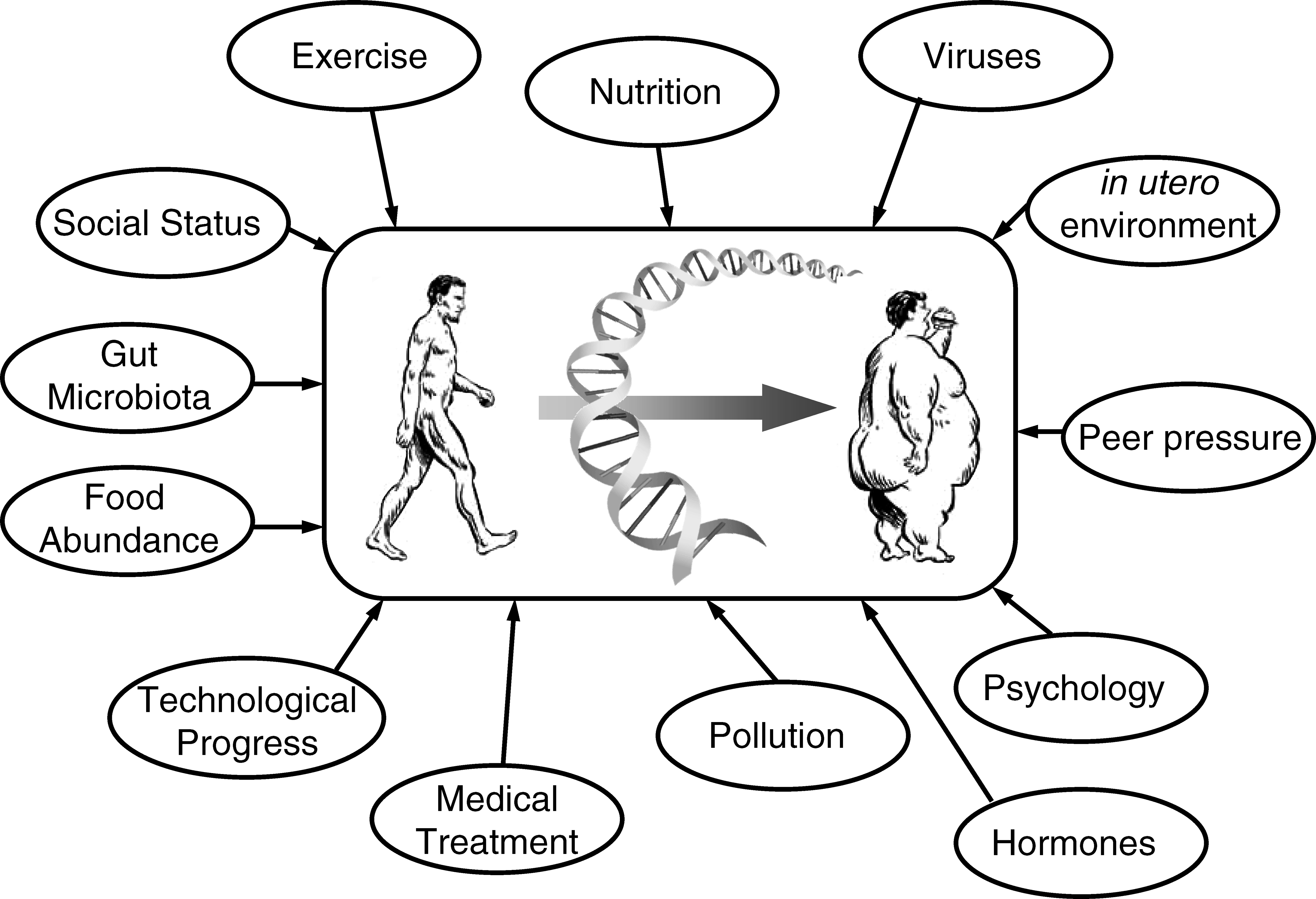 The complex interactions underlying polygenic obesity demonstrate that genetic, social, behavioral, and environmental factors are all capable of influencing the obese phenotype. The DNA strand should be interpreted as taking into account both genetic poly