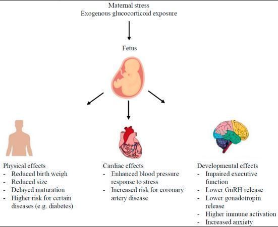 High levels of glucocorticoids experienced in utero through stress or exogenous administration can cause effects in the organ system of offspring.