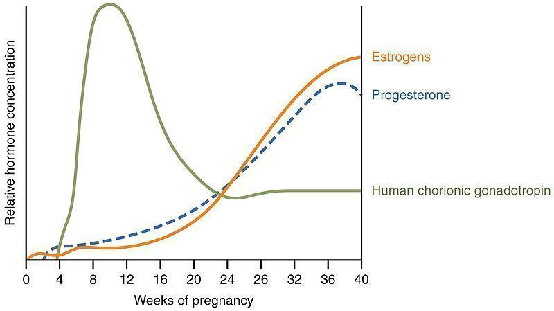 A diagram showing blood levels of different hormones involved in maintaining a pregnancy. Note the peak of the hCG concentration in the first trimester.