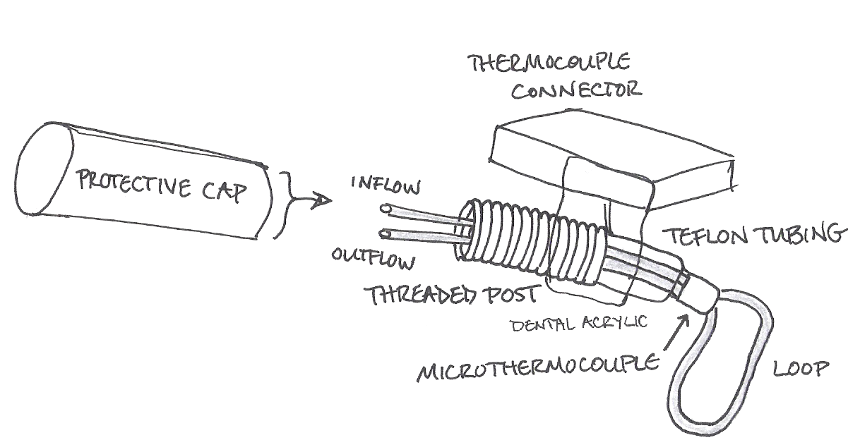A picture describing some parts of cryloop apparatus used for the process of vitrification.